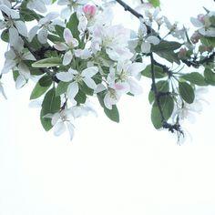 Spring has Sprung #laurynsbotanicals  #etsy