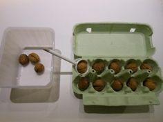 transvaser des noix