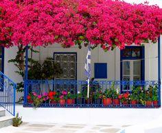 Facade with bougainvillea - Tinos Island, Cyclades, Greece Landscaping Near Me, Landscaping Plants, Beautiful Gardens, Beautiful Flowers, Bougainvillea Tree, Porches, Balcony Garden, Santorini, Home And Garden