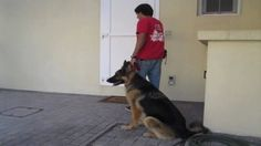 How to teach your dog to CALMLY walk on a LOOSE LEASH (part II)