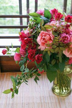181 Best Flowers Images Beautiful Flowers Planting Flowers Rose