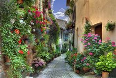 Spello, Italy...just imagine the people who have created/grown this colorful, green oasis down this little alley...it's their 'Secret Garden'.