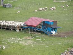 Mobile milk parlour for sheep. Made in Czech Republic