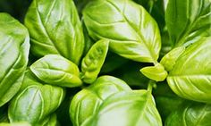 'When you buy a pot of basil, you're not buying one plant but a clump of more than 20 seedlings.'