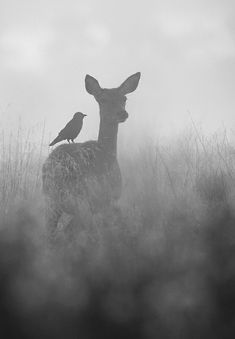 The Doe and Jackdaw by Steve Mackay