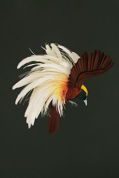 Greater Bird of Paradise | Diana Beltran Herrara - paper sculpture