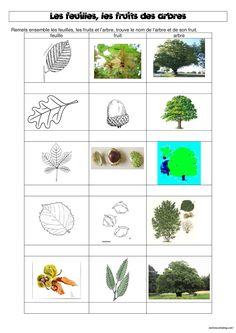 DDM : les feuilles, les fruits et les arbres de notre bois - Chez Maliluno