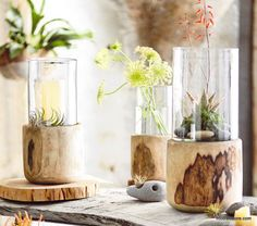 Roost Primitivo Hurricane Holders/Terrarium *2 day shipping | Modish Store