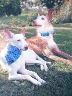 OBOJKY MARTINGALE | Martingale SEAWALL | Lobo collars - ručně šité výrobky pro Vaše mazlíčky Goats, Dog Collars, Animals, Animales, Animaux, Animal, Animais, Goat