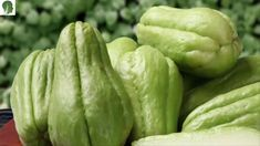 Despite the fact that it is valid, Chayote is a veggie that has been extremely useful in different sorts of sustenance. It is exceptionally famous since it serves to plan plates of mixed greens and it is a decent option while starting to eat better. In any case, numerous individuals frequently say that they don't …
