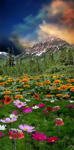 ~~flower fields and mountain landscape by peter holme iii~~