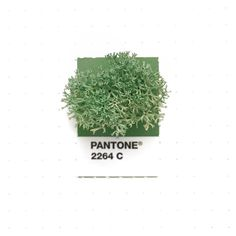 Pantone 2264 color match. Deer Moss. It's so fluffy and soft. >tinypmsmatch