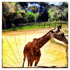 Santa Barbara Zoo is a must! - maybe when we are home? San Diego is too far away