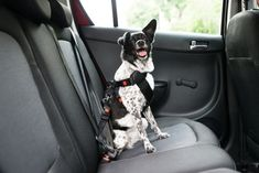 OMorc Dog Seat Belt Pack] Dog Harness Pet Car Vehicle Seatbelt Pet Safety Leash Leads for Dogs/Cats Nylon Fabric Material 1927 Inch Adjustable Black * Continue to the product at the image web link. (This is an affiliate link). Dog Seat Belt, Dog Car Seats, Seat Belts, Protective Dog Breeds, Rottweiler, Russell Terrier, Dog Seat Covers, Dog Safety, Safety Tips