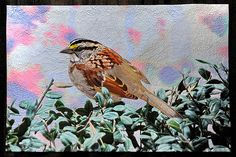 White Throated Sparrow by Barbara McKie,Old Lyme, Connecticut