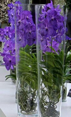 Blue Vanda orchids in glass vases