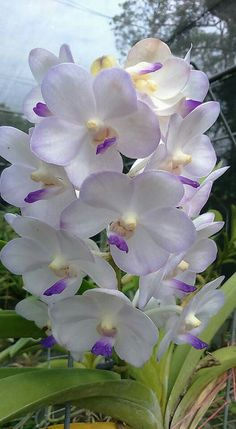 Orchid. ..