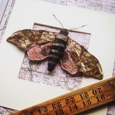 I'm a bit in love with this one. An Eyed Hawk Moth made in Liberty Tana lawn with lots of embroidery. #moth #hawkmoth #embroidery #embroideryart #lepidoptera #taxidermy #entomology #butterflies #specimens #stitchersofinstagram #insectsofinstagram #thatsdarling #mycreativebiz