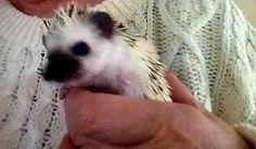 """""""Twiggy Prickles at 8 week's old~April 4,2016"""""""