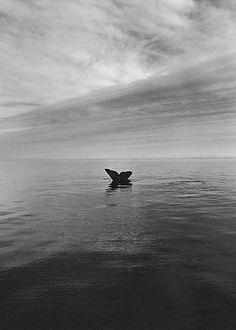 Adelita Peninsula Valdes, Atlantic Coast of Patagonia, Argentina [whale's tail] 2004 gelatin silver print