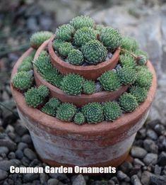 19 Schone Bilder Zu Steingarten Succulents Garden Decorations
