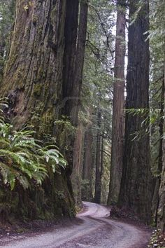 Redwood National Forest,  I have been here but it has been many years ago, would be fun to go again!!