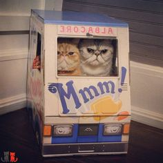 Shut up you I'm driving!  @famousoto #famousoto  #exoticshorthair #cat #cute #flatface #kitten #meow #pet #mreggs #catlover #exoticsofinstagram #smushface #weeklyfluff #sirpumpkin