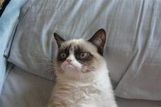 Грампи - самый угрюмый кот планеты!
