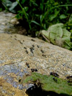 Ants Go Marching #Chalkidiki