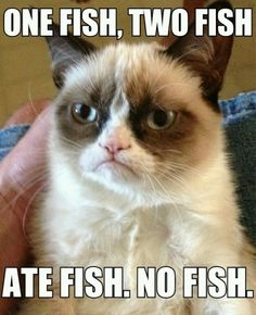 One fish, two fish, ate fish, no fish. #GrumpyCat
