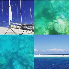 With all the rain in Melbourne today it feels like winter has really set in who would prefer to be cruising the Great Barrier Reef in sunny Queensland instead? #cairns #greatbarrierreef #michaelmanscay #oceanspirit #snorkeling #scubadiving #sealife #birdsanctuary #fishfeeding #semisubmersible #sunshine #packyourbags #balwyntravel by balwyn_travel http://ift.tt/1UokkV2