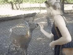 So polite deer