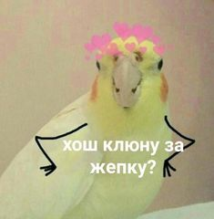 Reaction Pictures, Funny Pictures, Cat Memes, Funny Memes, Hello Memes, Happy Memes, Russian Memes, Cute Love Memes, Mood Pics