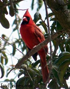 #hellomornings, #means2me  I spend my morning with the cardinals that live outside the breakfast table window.
