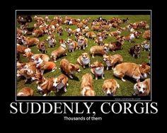 !!!!!! corgis-corgis-corgis