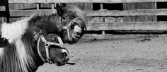 Pferd, Tier, Reiten, Reiterhof