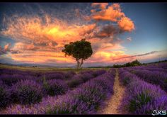 Photograph A summer in provence by Karim SAARI on 500px