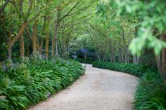 Love the simple planting and the way that this path draws you on - Rick Eckersley Romsey garden Traditional Landscape, Contemporary Landscape, Landscape Plans, Landscape Design, Landscape Architecture, Garden Borders, Garden Paths, Outdoor Landscaping, Outdoor Gardens