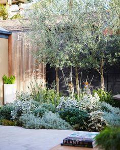 Outdoor Landscaping, Front Yard Landscaping, Outdoor Gardens, Australian Garden Design, Australian Native Garden, Backyard Garden Design, Garden Landscape Design, Potted Trees Patio, Dream Garden