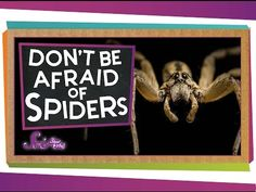 Spiders! Love them o