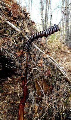 Walking stick One Of A Kind Collectors Carved by bearpawrustics