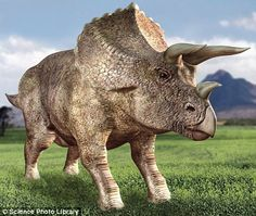Triceratops | Triceratops used their horns to inflict injuries on rivals, battle ...