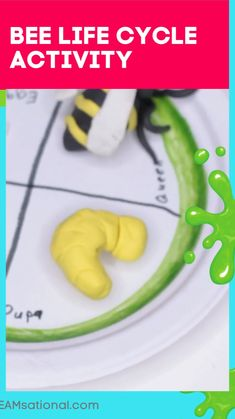 Preschool Science Activities, Science Classroom, Science For Kids, Science Experiments, Preschool Activities, Bee Life Cycle, Kids Laughing, Life Cycles, Teaching Kids