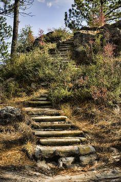 Longleaf Vista Trail, Kisatchie National Park, Louisiana by Heather Applegate
