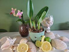 Indoor Plants For Oxygen, Best Indoor Plants, Orchid Roots, Orchid Leaves, Indoor Orchids, Orchids Garden, Orchid Plant Care, Orchid Plants, Orchid Fertilizer