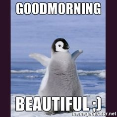 Penguins Gone Rogue - Penguin Funny - Funny Penguin meme - - Penguins Gone Rogue The post Penguins Gone Rogue appeared first on Gag Dad. Funny Animal Memes, Cute Funny Animals, Cute Baby Animals, Animals And Pets, Penguins And Polar Bears, Baby Penguins, Penguin Pictures, Cute Pictures, Cute Good Morning Meme