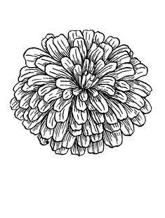 Zinnia Coloring Pages - Best Coloring Pages For Kids Skull Tattoo Flowers, Flower Tattoo Drawings, Flower Tattoo Arm, Printable Flower Coloring Pages, Fairy Coloring Pages, Coloring Pages For Kids, Family Flowers, Small Flowers, Draw Flowers