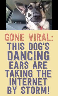 GONE VIRAL! This dog's dancing ears are taking the internet by storm!!