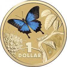 ulysses butterflies - Google Search
