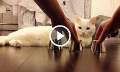 Игра в наперстки с котом